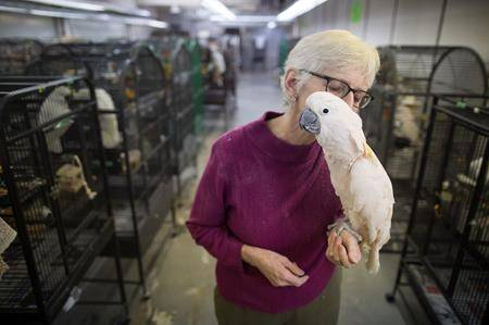 Bob and his parrot buddies living in B.C. warehouse need forever homes