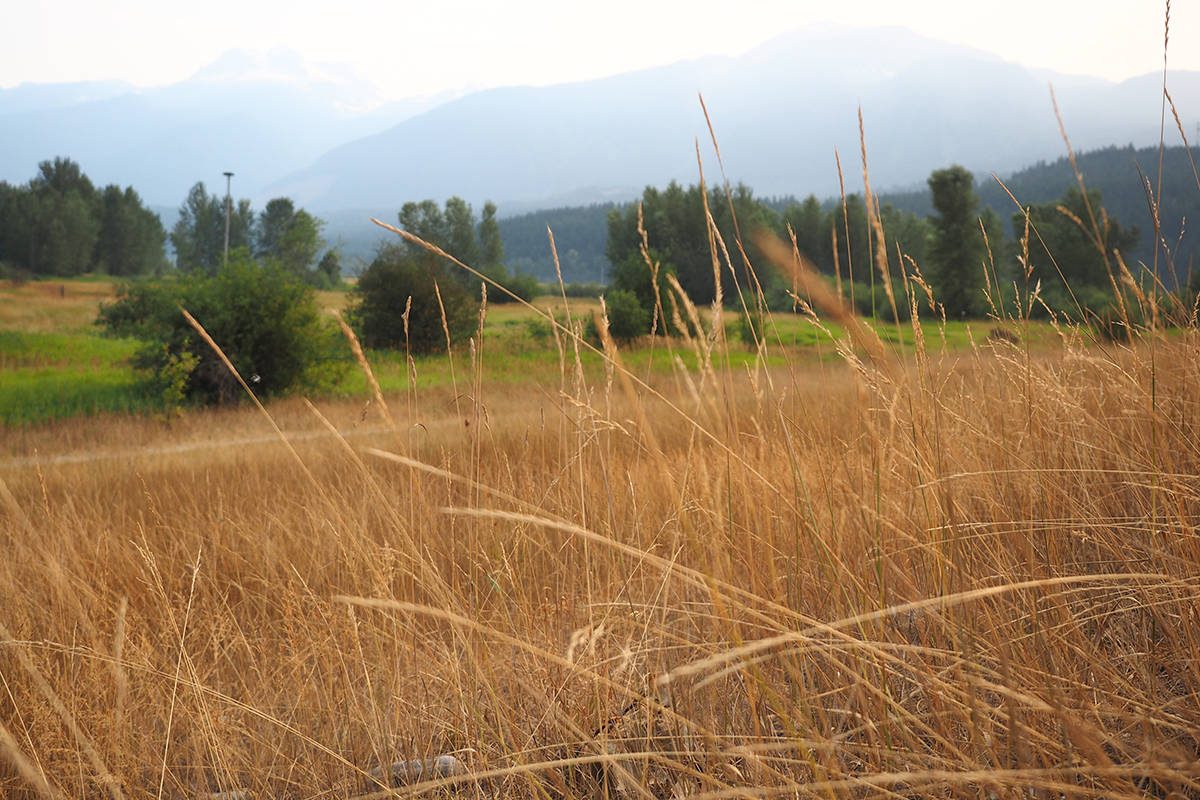 Drought level ratings on Vancouver Island have been elevated to the highest level. File photo