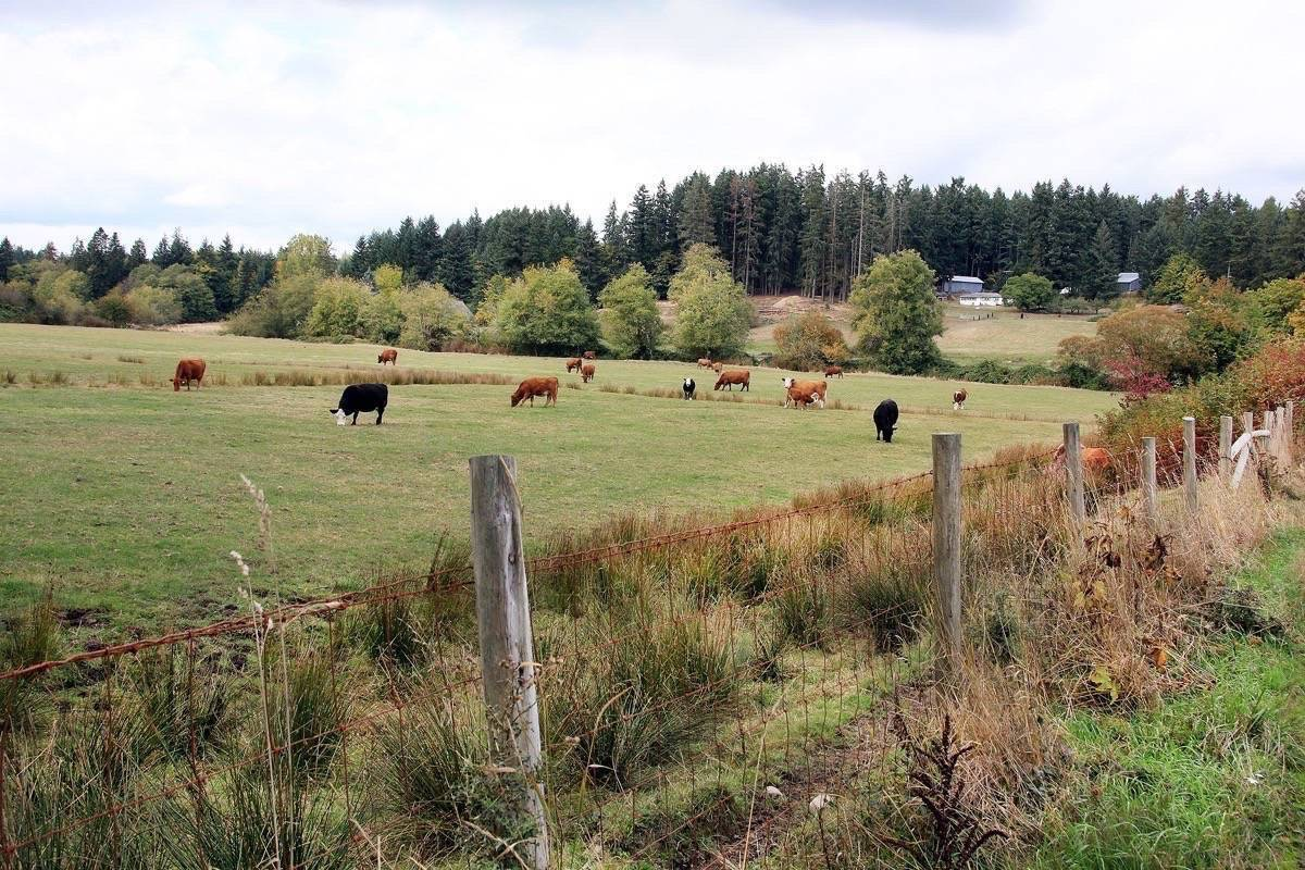 Group wants to start a pilot program for regenerative farms in North Cowichan. (File photo)