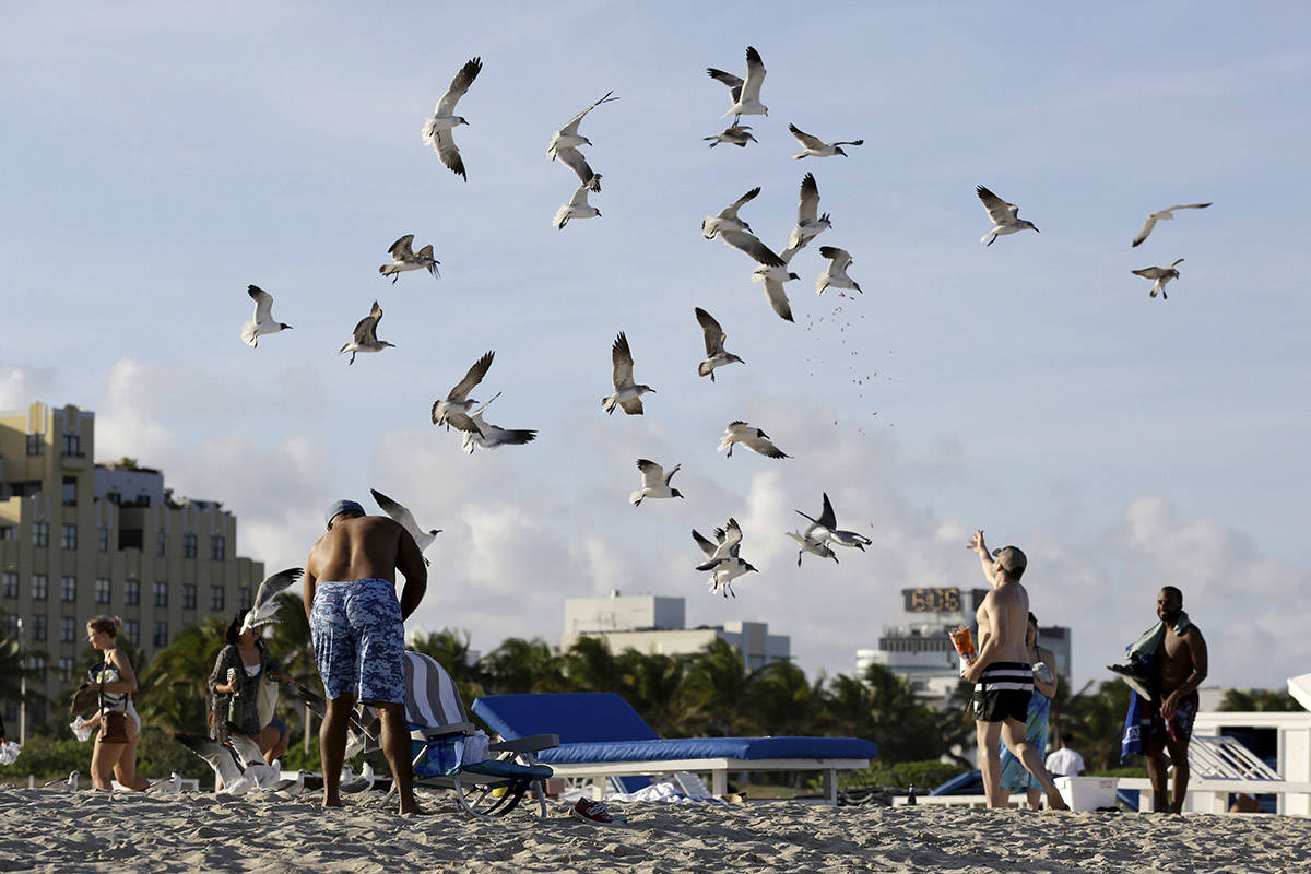 FILE – People feed gulls on the beach during spring break Saturday, March 14, 2020, in Miami Beach, Fla. (AP Photo/Lynne Sladky)
