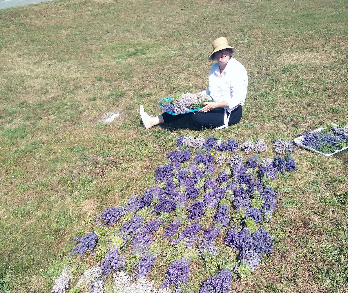 Kristie Anne Aurel lays out lavender that's been ripe for the picking. (Photo submitted)