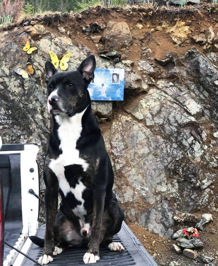 Derek Descoteau's loyal dog Harvey at the DD Memorial site. (Photo submitted)