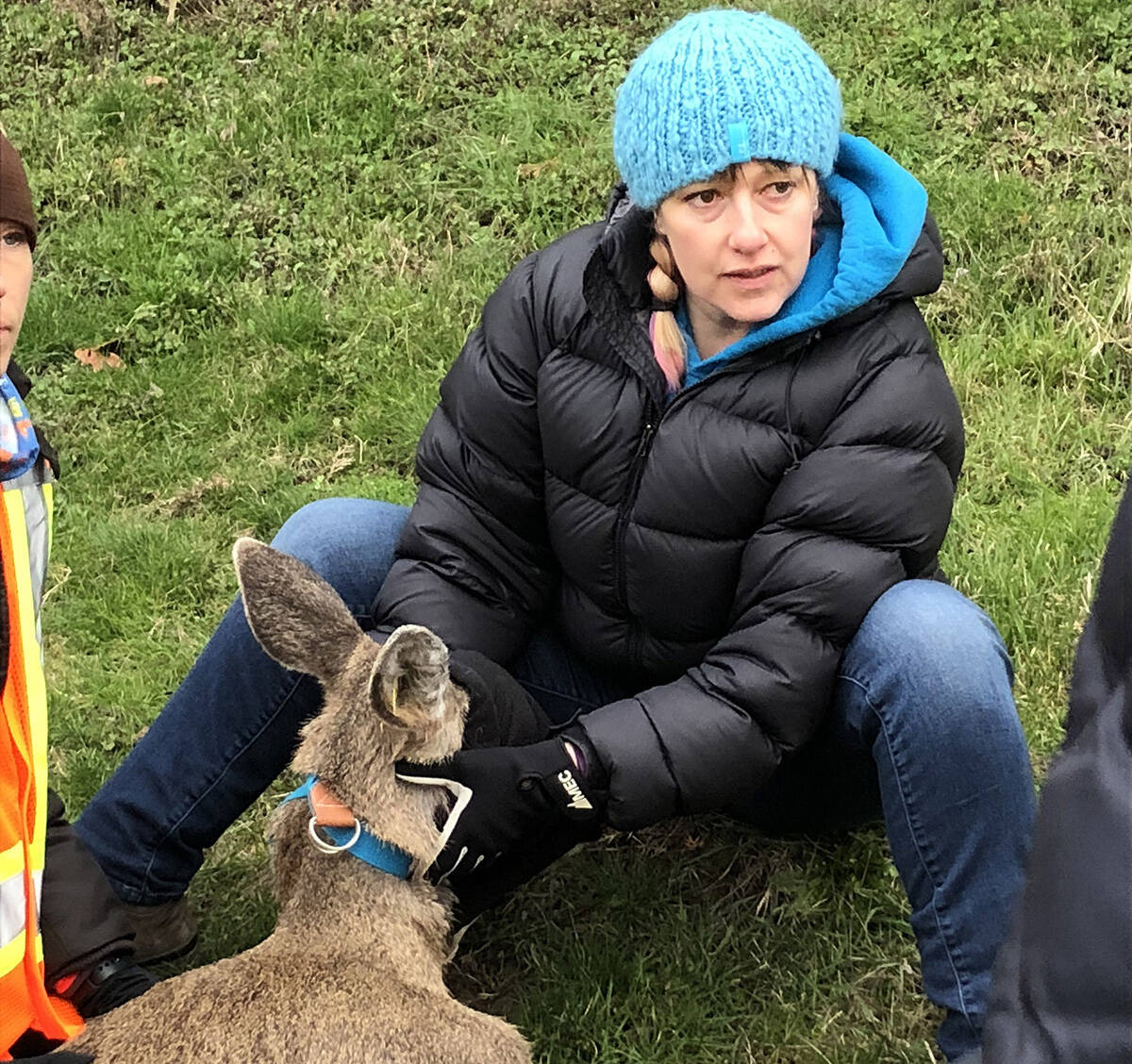 Wildlife biologist Alina Fisher, a PHD student in Environmental Studies at UVic works with deer in Oak Bay through the Urban Wildlife Stewardship Society. (Courtesy Alina Fisher)